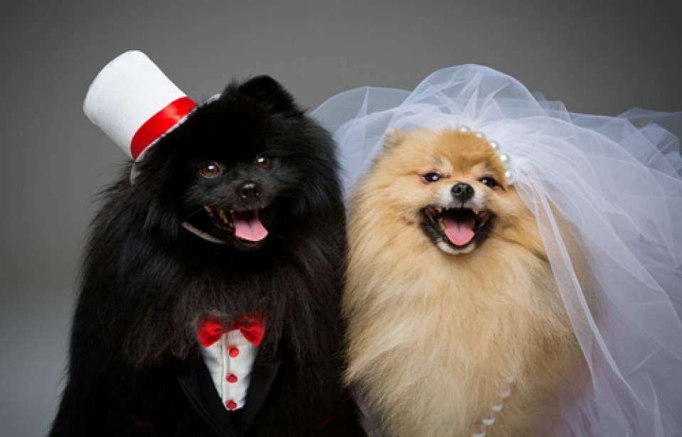 Holidays, Ranked by How Cute Puppies Looks in Costumes