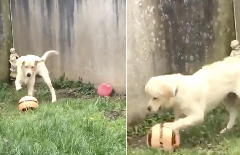 Soccer Playing Dog