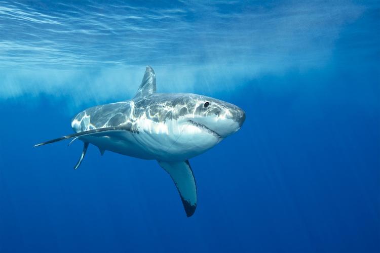 Shark Attack off North Carolina Coast