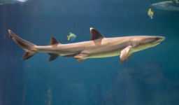 College Student Killed by Sharks While Vacationing in the Bahamas