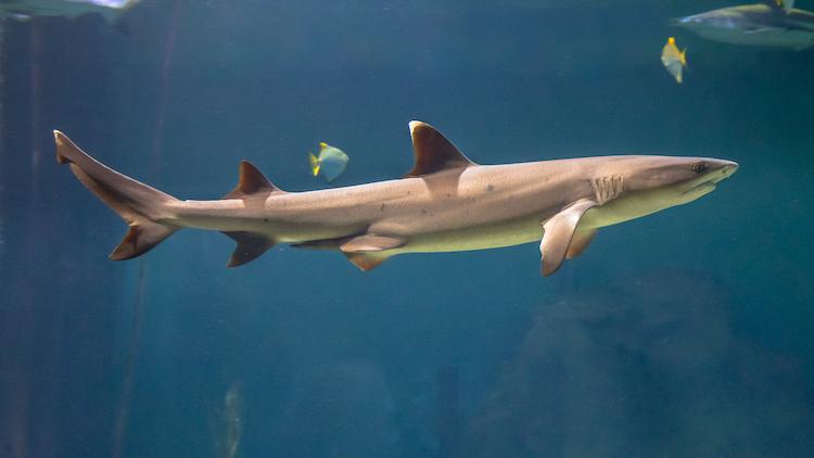 College Student Killed in Bizarre Shark Attack