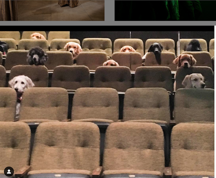 Service dogs in theater