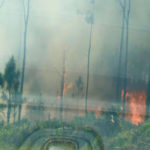 When Gender Reveals Go Wrong: The 10-Acre Fire in Florida Edition