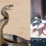 Mom Narrowly Saves Daughters From Venomous Snake That Was on Their Front Porch, The Video Will Make Your Skin Crawl