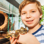 My Wife Is Furious I Let Our 6-Year-Old Son Watch a Family Member's Pet Snake Eat a Mouse: Advice?