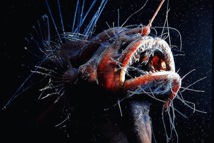 25 bizarre sea creatures that will scare you out of the ocean forever