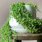 25 Houseplants We Want to Create a Quarantine Oasis With