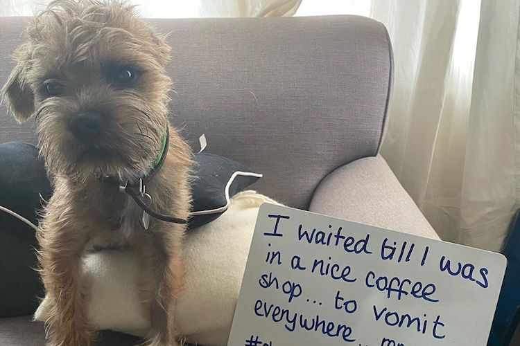 15 times our furry friends got hilariously dog-shamed