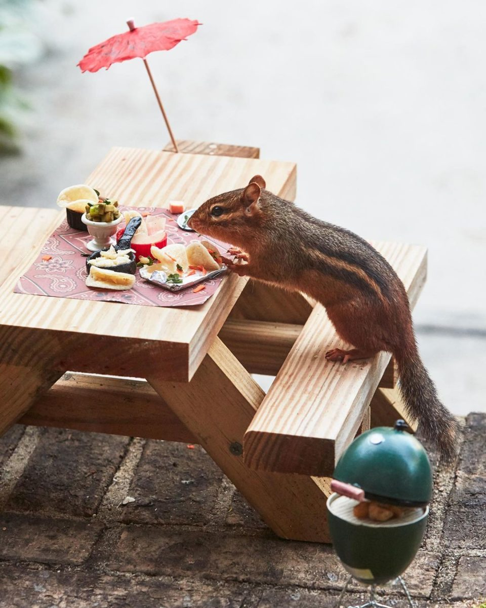 the restaurant for a chipmunk serving mini tacos, guacamole and a smoker for nuts