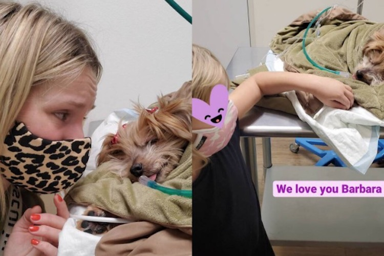 kristen bell and daughters say goodbye to beloved dog named barbara with heartfelt tribute