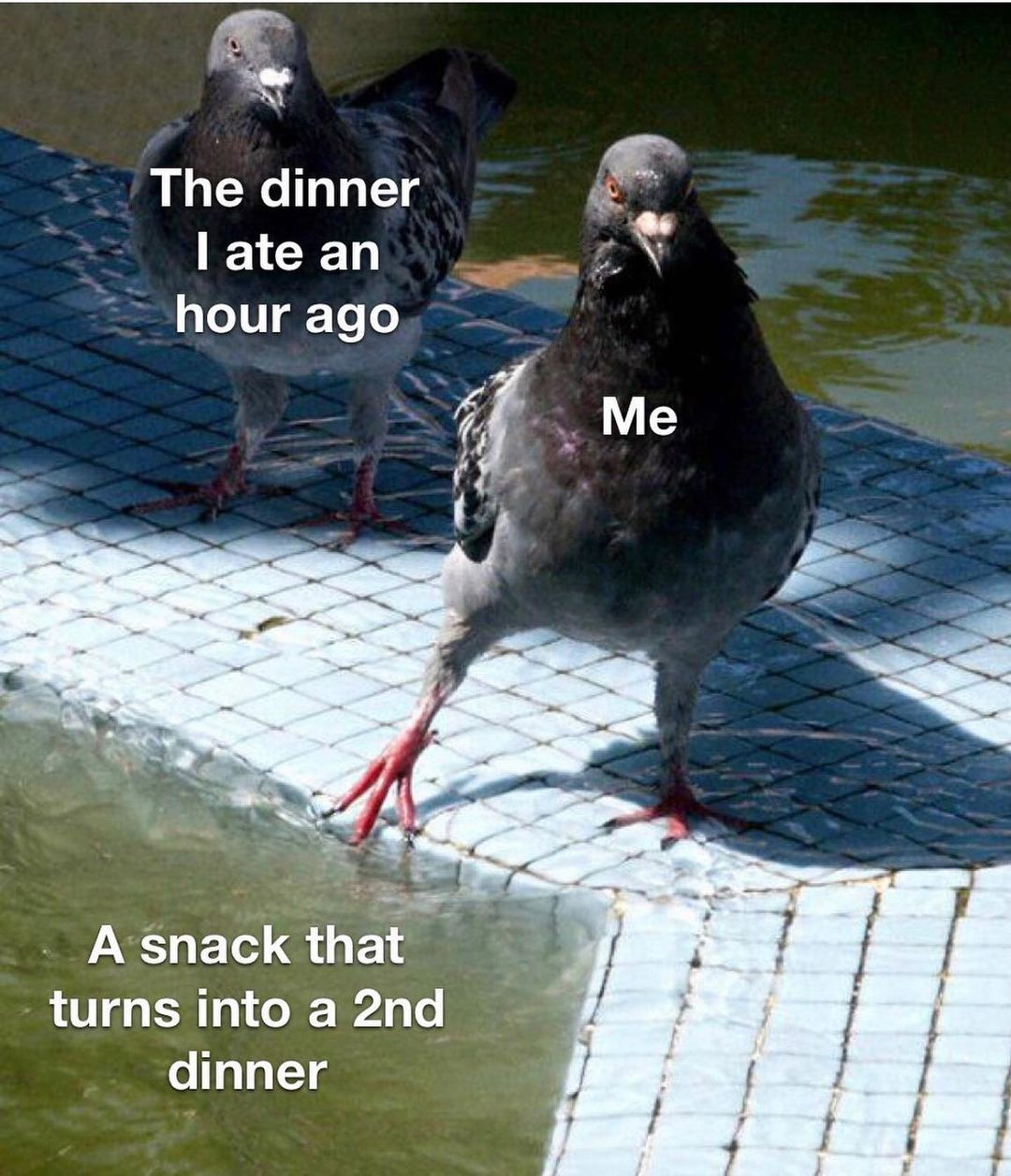 15 hilarious food memes to celebrate thanksgiving