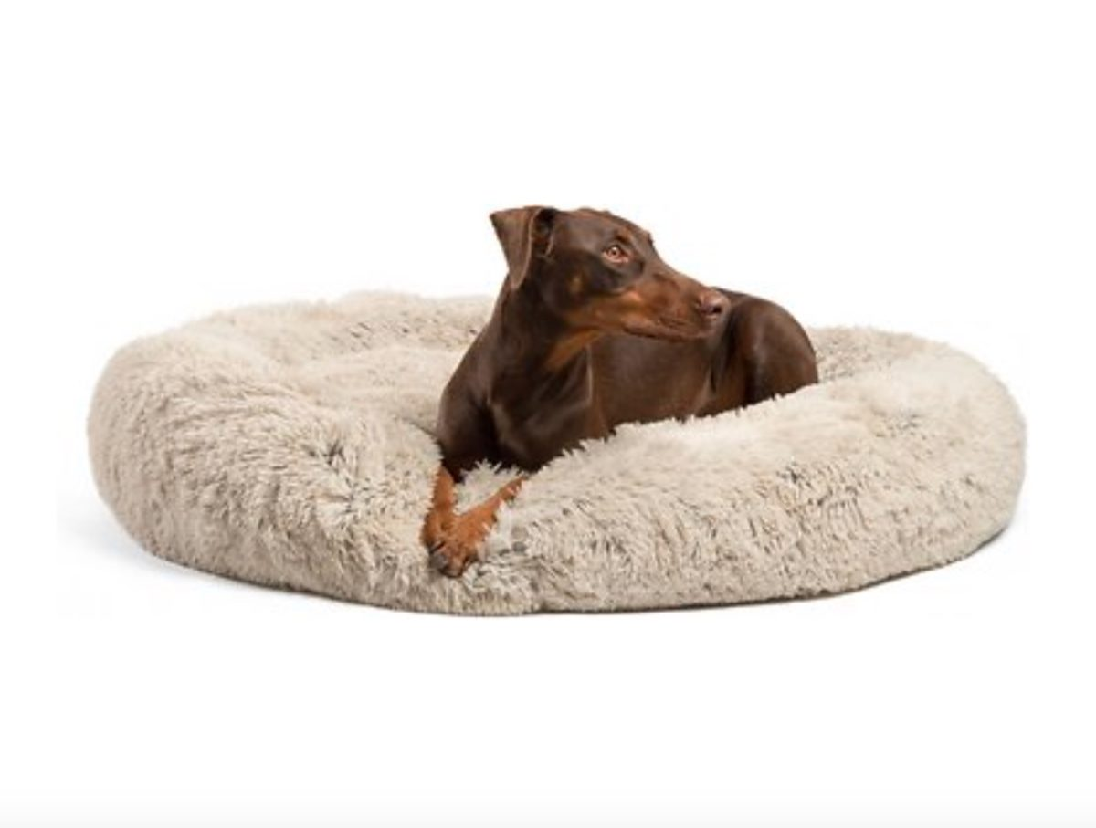 Pets Like Christmas Too, Here Are the Best Gifts For Your Furry Companion