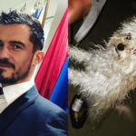 Meet Orlando Bloom's New Foster Dog, Buddy