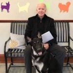 Joe Biden's Dog to Be the Very First Shelter Dog in the White House