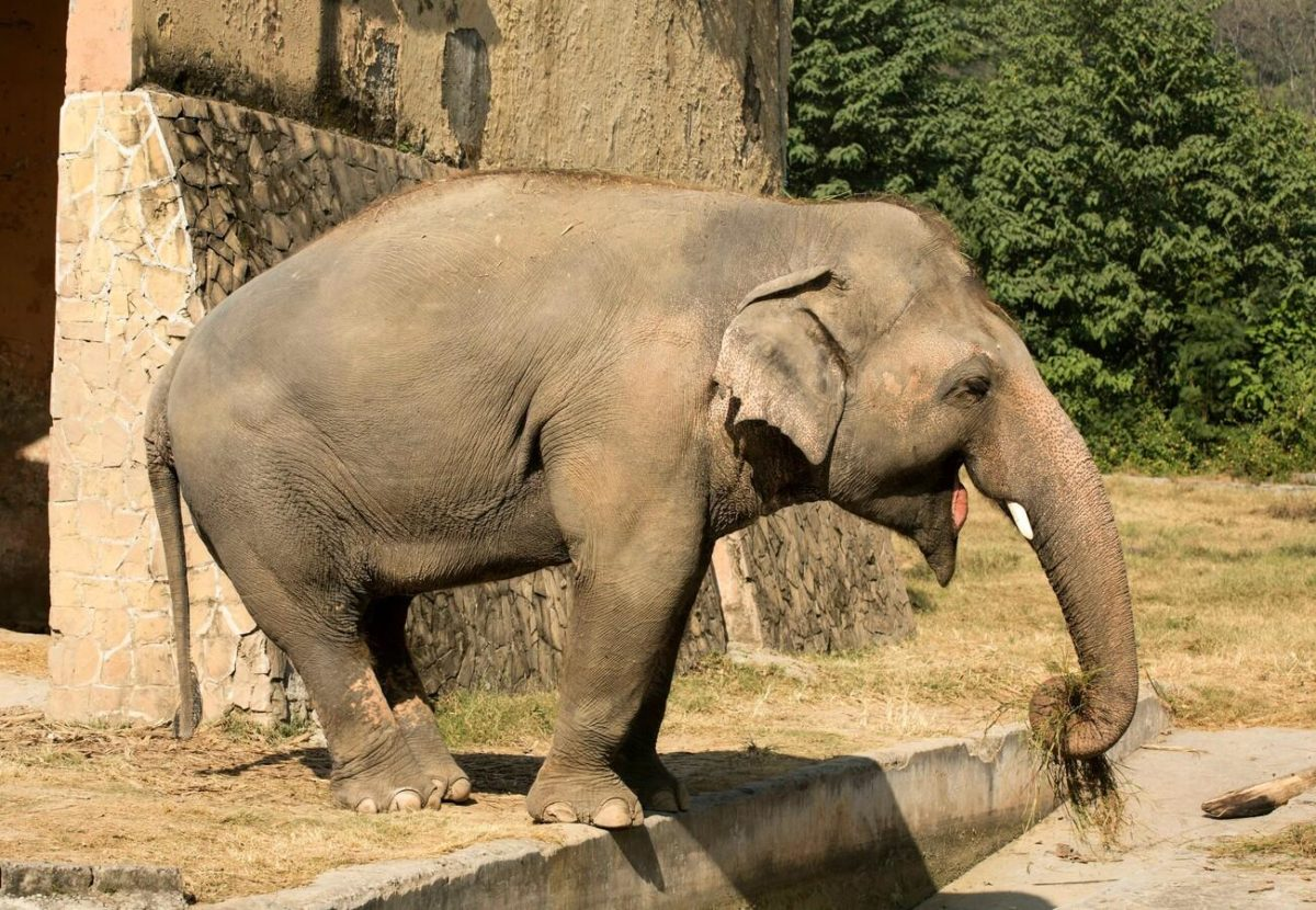 """cher's """"free the wild"""" charity helps find new home for """"world's loneliest elephant"""""""