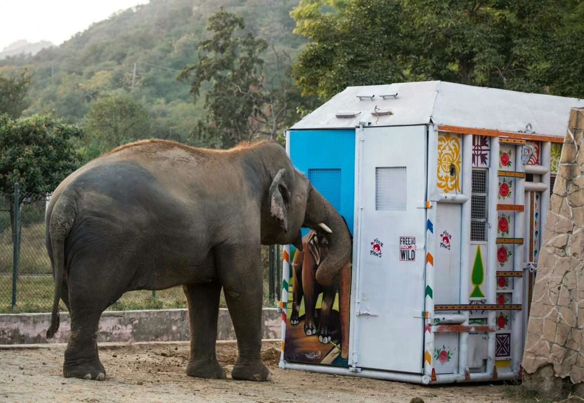 """cher's """"free the wild"""" charity helps find new home for """"world's loneliest elephant""""   cher has helped the """"world's loneliest elephant"""" find a new home. kaavan the lonely elephant was moved from islamabad, pakistan to his new home in cambodia."""