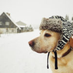 My Landlord Won't Let Me Bring Our Dog Inside Despite Freezing Winter Conditions: What Should I Do?