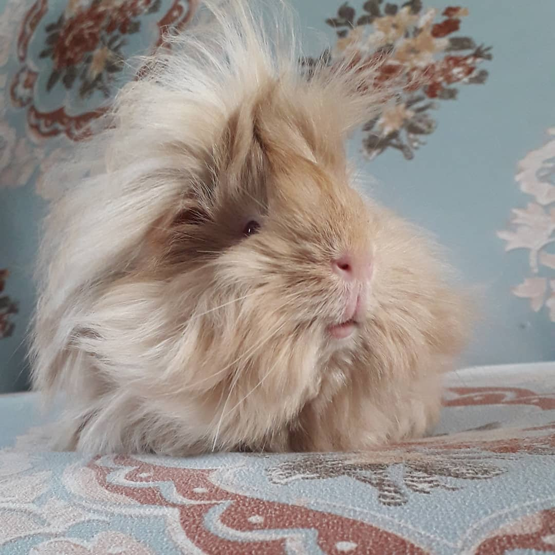 25 pictures of extremely fluffy animals that will make you say 'aww!'
