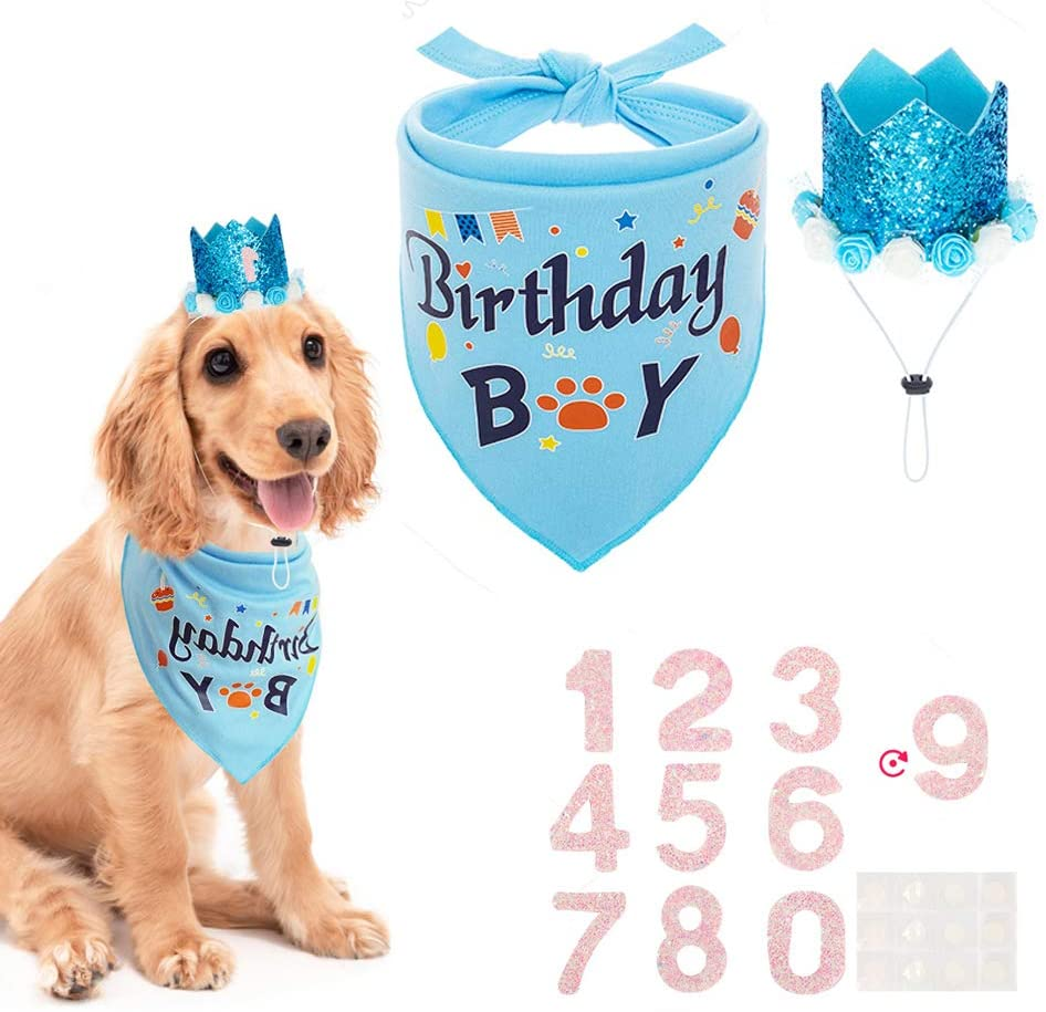 i threw my rescue dog a first birthday, and no that's not weird | parenting questions | mamas uncut 61qkmcwvpwl. ac sl1002