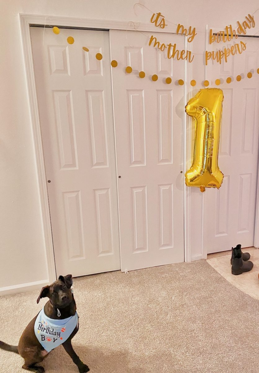 i threw my rescue dog a first birthday, and no that's not weird