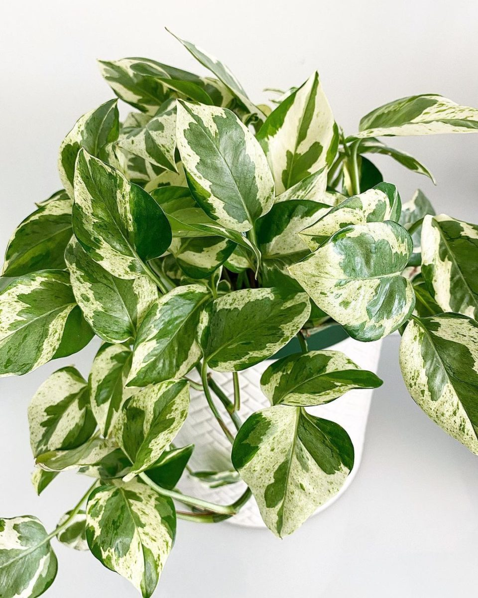 nasa claims these 25 plants clean the air in your home