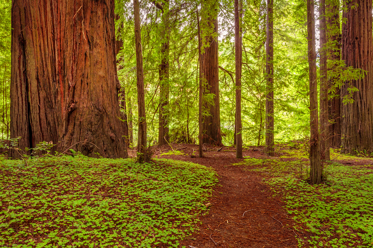 parents of 5 killed when giant redwood tree falls on their car during birthday road trip