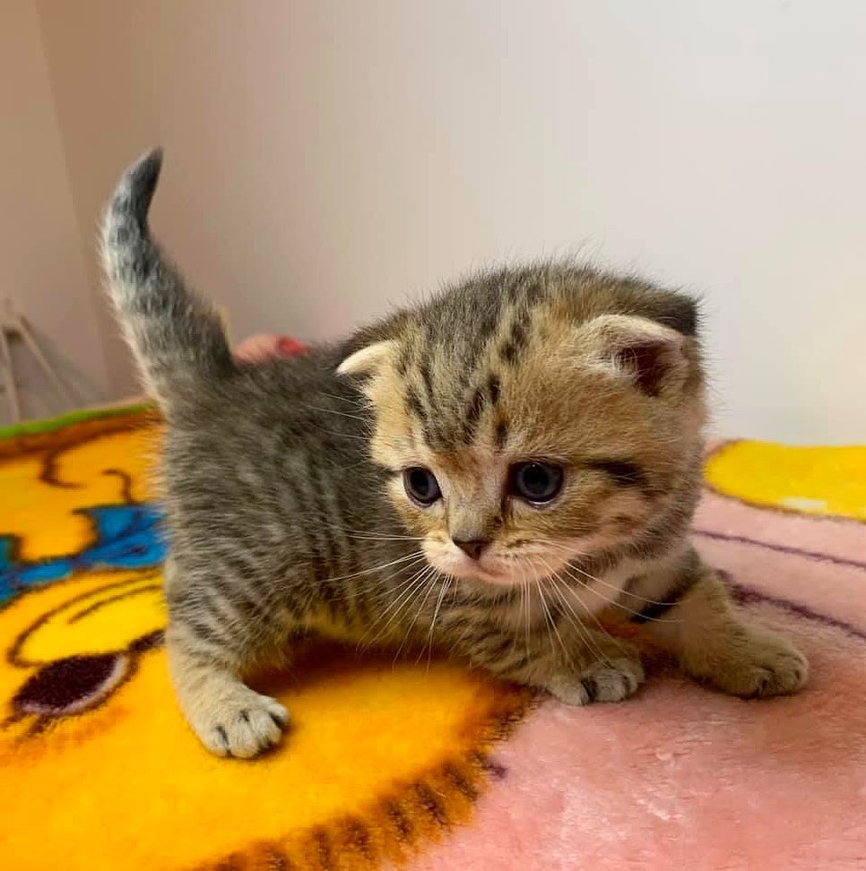 you need a dose of smol in your life! check out these adorable little fur babies