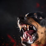 10-Month-Old Attacked And Killed By Family's 2 Rottweilers In North Carolina