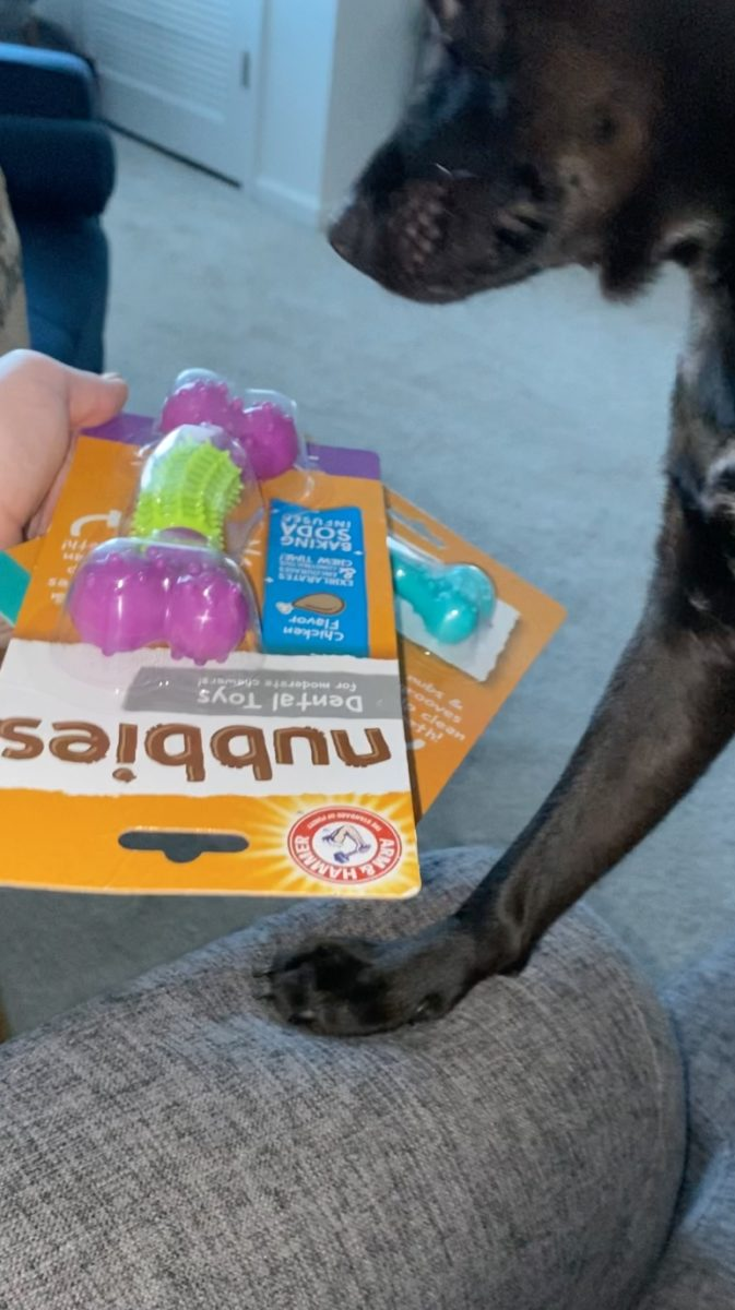 if you have a dog who loves to chew, you're going to want these toys