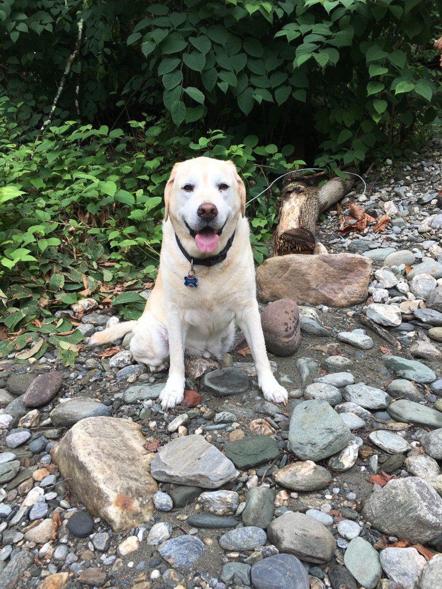 dog health pet
