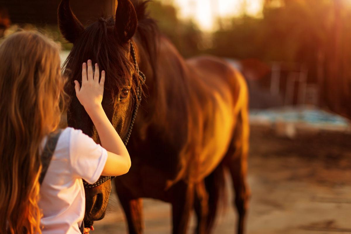 horse pet health
