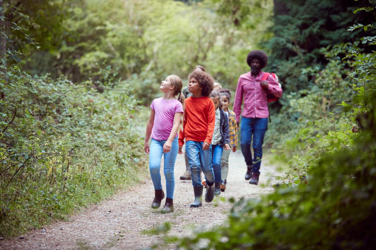 kids walk nature plant herb