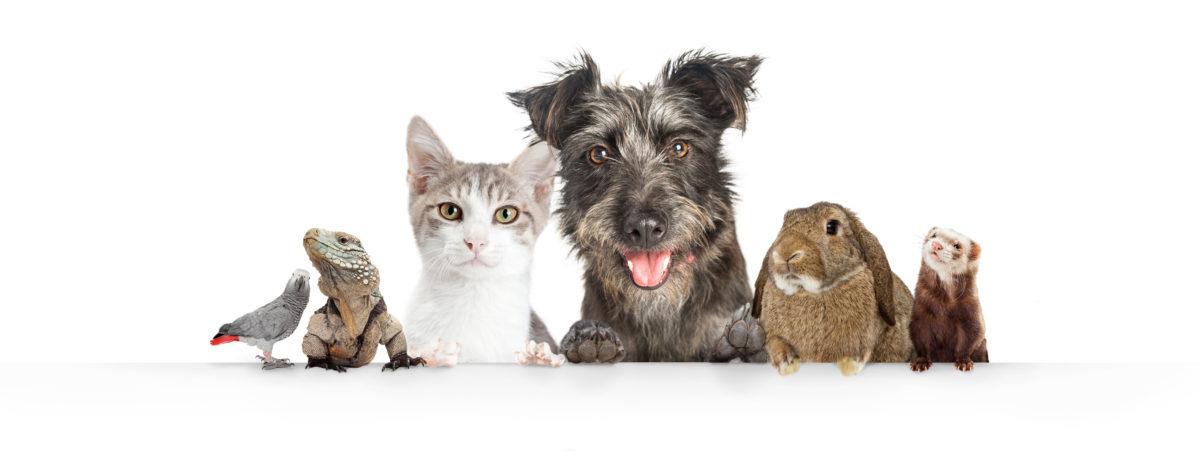 pet family health