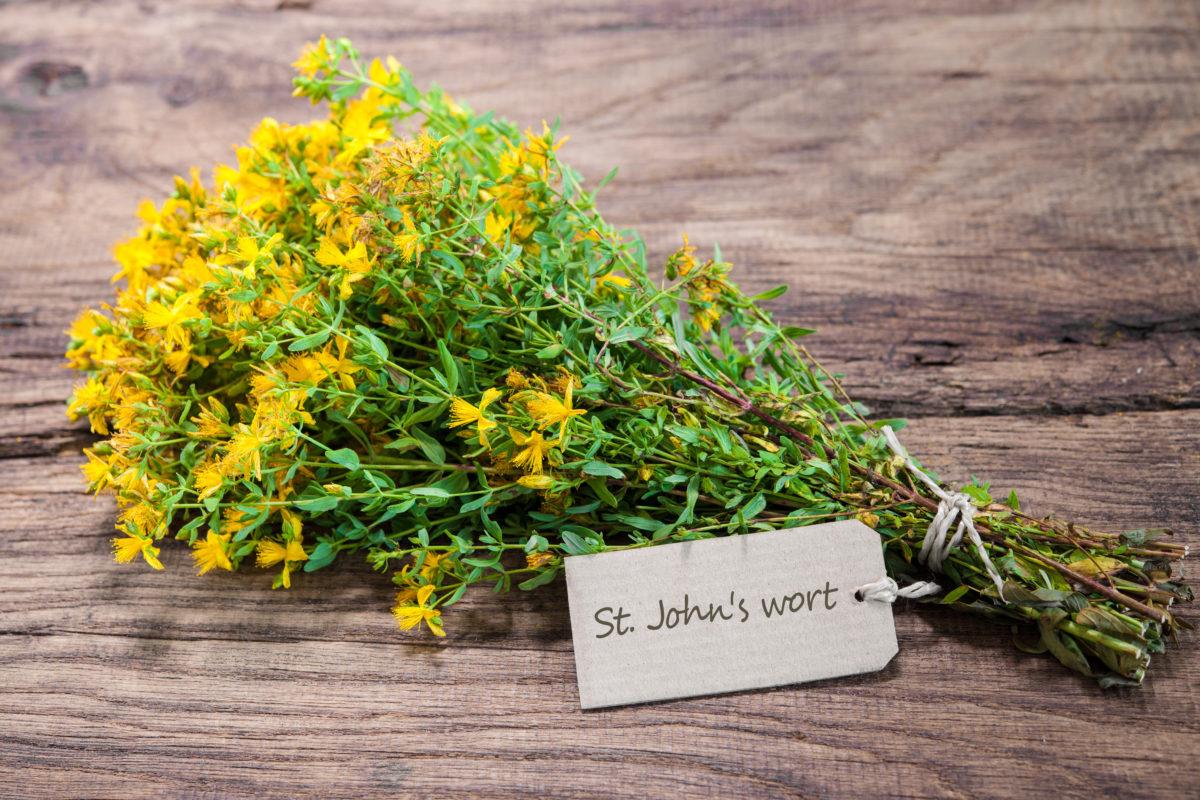 st johns plant herb