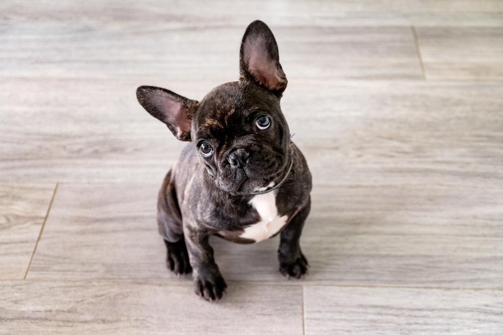 30 unique dog names