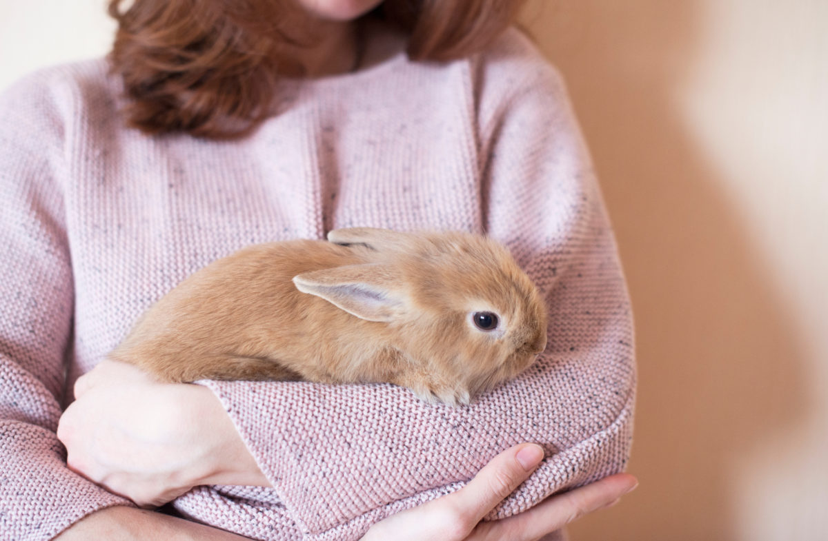 aita for telling my husband i will not rehome my pet rabbit after it scratched our daughter?